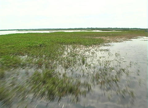 View from an Airboat (3) Footage