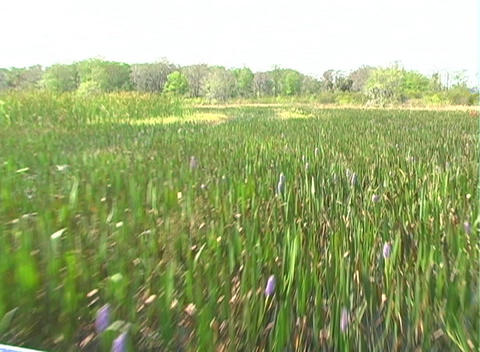 View from an Airboat (5) Stock Video Footage