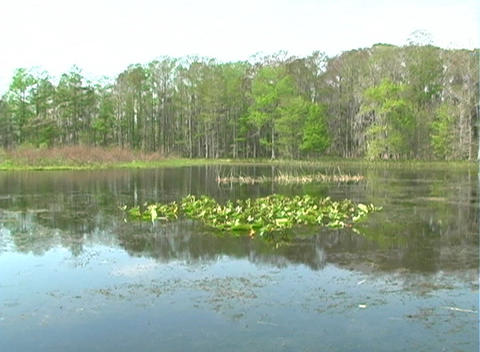 View from an Airboat (7) Stock Video Footage