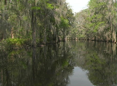 View from an Airboat (9) Stock Video Footage