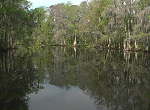 View from an Airboat (11) Stock Video Footage