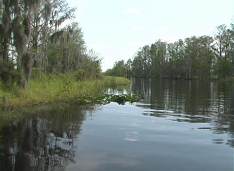 View from an Airboat (15) Footage