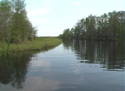 View from an Airboat (15) Stock Video Footage