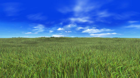 Grass A Stock Video Footage