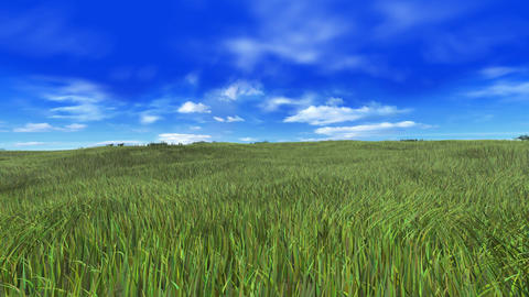 Grass A Animation