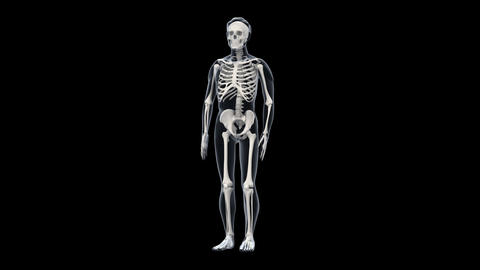 H Bone A Stock Video Footage