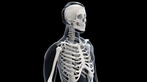 H Bone C Stock Video Footage