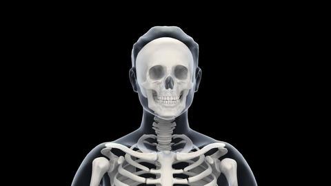 H Bone R Stock Video Footage