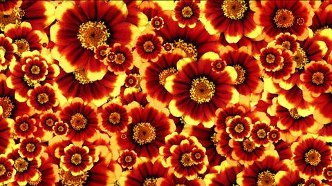 fiori 3 Animation