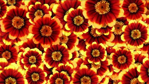 fiori 3 Stock Video Footage