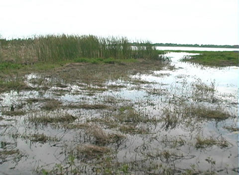 View from an Airboat (17) Footage