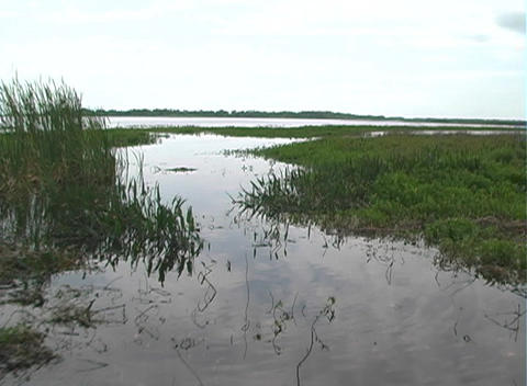 View from an Airboat (17) Stock Video Footage