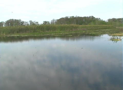 View from an Airboat (19) Stock Video Footage