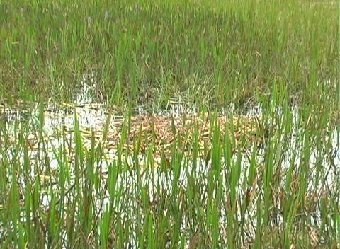 airboat23 Stock Video Footage
