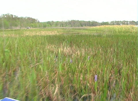 View from an Airboat (25) Stock Video Footage