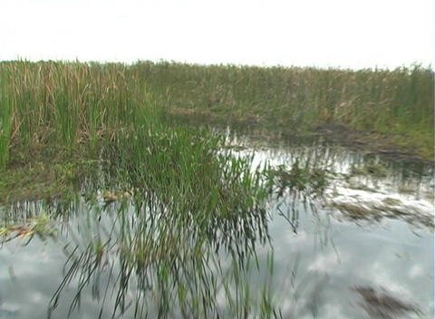 View from an Airboat (27) Footage