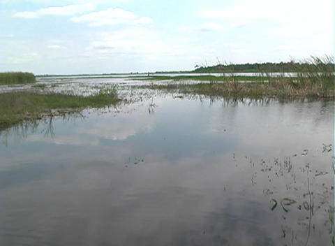 View from an Airboat (27) Stock Video Footage