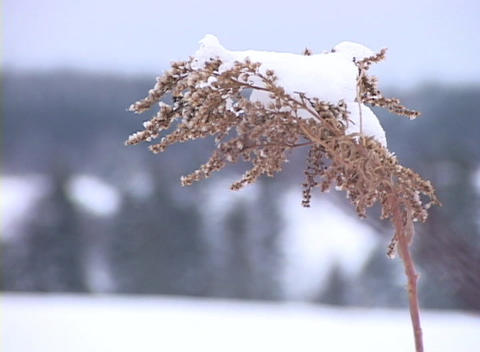 Snow-covered Grass Close-up 1 stock footage