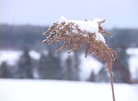 Snow-covered Grass Close-up 1 Stock Video Footage