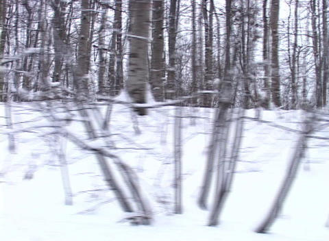 Tracking Shot of a Snowy Landscape (2) Stock Video Footage