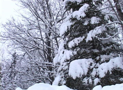 Beautiful Winter Scene Stock Video Footage