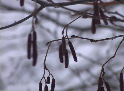 Snow-covered Trees Stock Video Footage