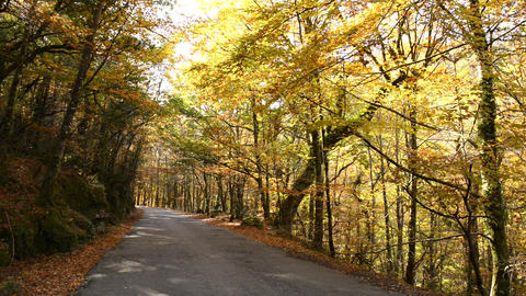 Road to Autumn Stock Video Footage