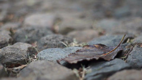 Dry Leaf on Rocks Dolly Stock Video Footage
