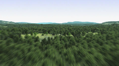 Flying over the forest Stock Video Footage