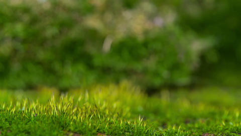 Young Shoots Of Moss In The Sunshine Stock Video Footage