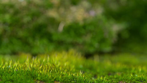 Young Shoots Of Moss In The Sunshine stock footage