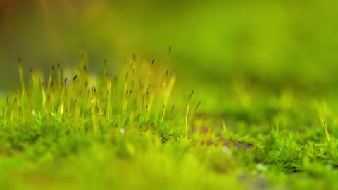Moss, Close-Up Footage