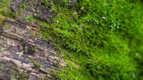 Lichen Close Up On A Wooden Board Stock Video Footage
