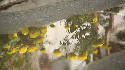 Drops of rain on the pavement Footage