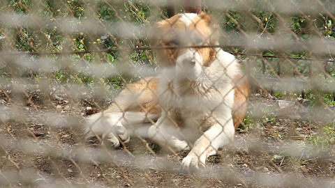 A dog behind the bars of the restricted area of th Footage