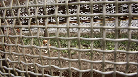 A dog behind the bars of the restricted area of th Stock Video Footage