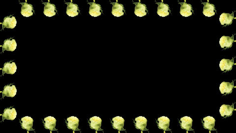 4K. Frame of blooming roses time-lapse with alpha Stock Video Footage