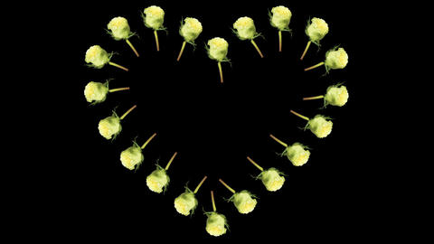 Frame of blooming roses time-lapse heart with alph Stock Video Footage