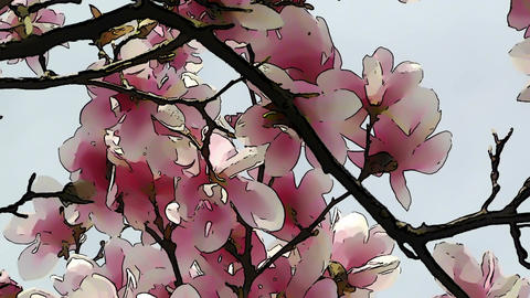 Liliodendron Tulip Tree Spring Comic Marvel 2 Stock Video Footage