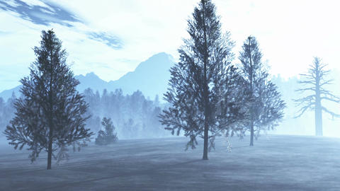 Mysterious Northern Forest Winter 1 Stock Video Footage