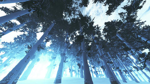 Mysterious Northern Forest Winter 4 Stock Video Footage