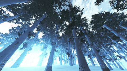 Mysterious Northern Forest Winter 4 Animation
