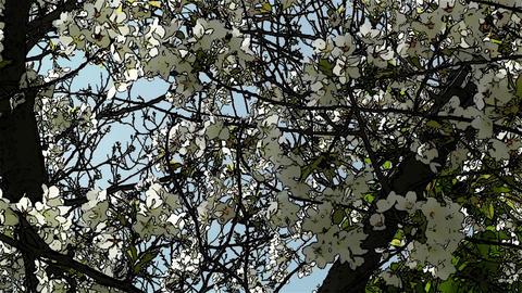 Springtime Blossoming Tree Comic Marvel 4 Stock Video Footage