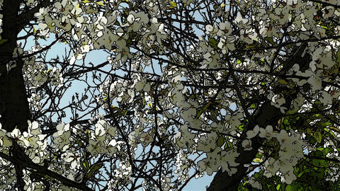 Springtime Blossoming Tree Comic Marvel 4 Stock Video Footage