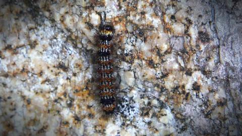Crawling caterpillar Stock Video Footage