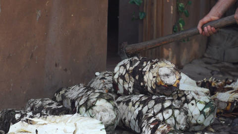 Chopping Agave Stock Video Footage