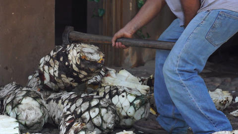 Chopping Agave Footage