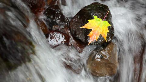 Autumn Scene Stock Video Footage