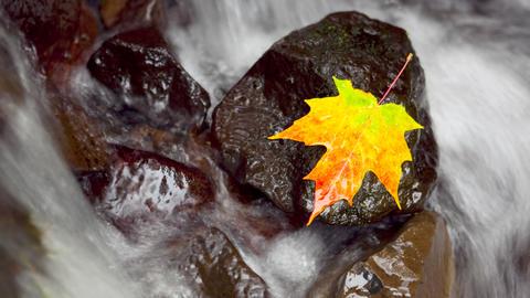 Autumn Scene, time lapse Stock Video Footage