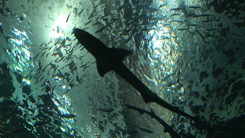 Shark Habitat Stock Video Footage